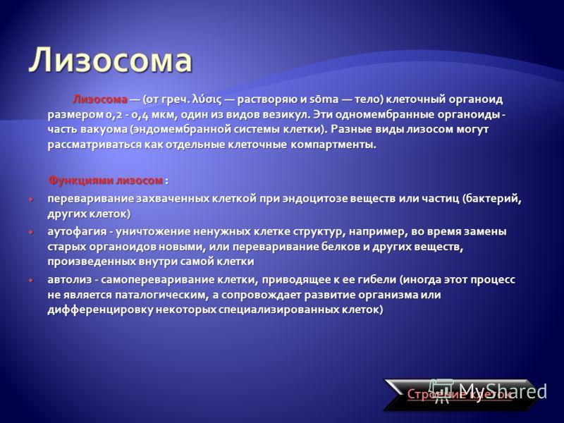 Лизосома (от греч. λύσις растворяю и sōma тело) клеточный органоид размером 0,2 - 0,4 мкм, один из видов везикул. Эти одномембранные органоиды - часть вакуома (эндомембранной системы клетки). Разные виды лизосом могут рассматриваться как отдельные кл