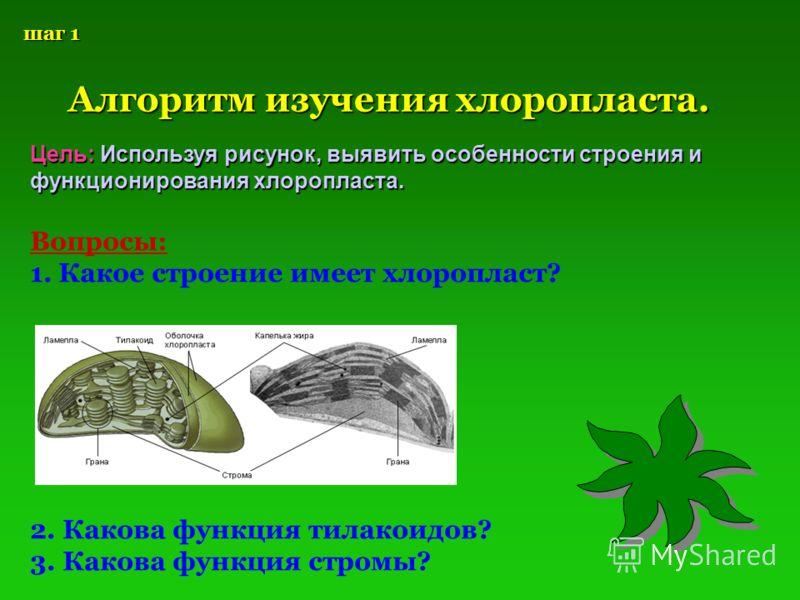 шаг 1 Алгоритм изучения хлоропласта. Цель: Используя рисунок, выявить особенности строения и функционирования хлоропласта. Вопросы: 1. Какое строение имеет хлоропласт? 2. Какова функция тилакоидов? 3. Какова функция стромы?