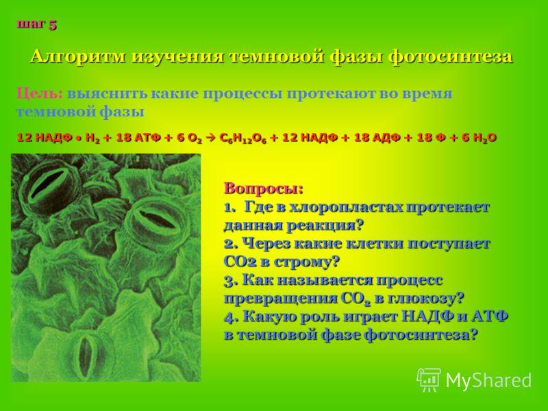 шаг 5 Алгоритм изучения темновой фазы фотосинтеза Цель: выяснить какие процессы протекают во время темновой фазы Вопросы: 1.Г де в хлоропластах протекает данная реакция? 2. Через какие клетки поступает СО2 в строму? 3. Как называется процесс превраще