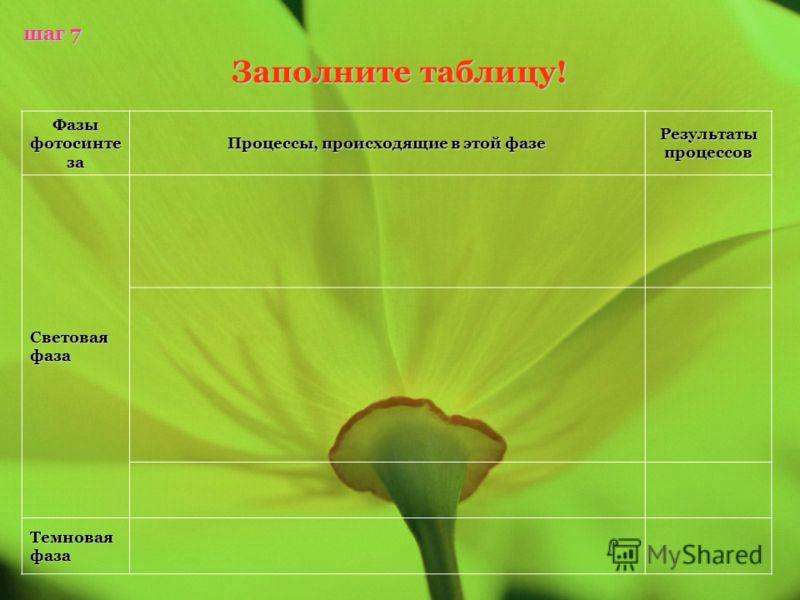 Фазы фотосинте за Процессы, происходящие в этой фазе Результаты процессов Световая фаза Темновая фаза шаг 7 Заполните таблицу!