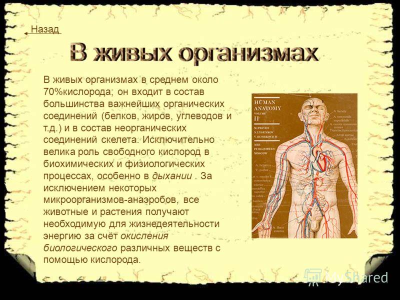 В живых организмах в среднем около 70%кислорода; он входит в состав большинства важнейших органических соединений (белков, жиров, углеводов и т.д.) и в состав неорганических соединений скелета. Исключительно велика роль свободного кислород в биохимич