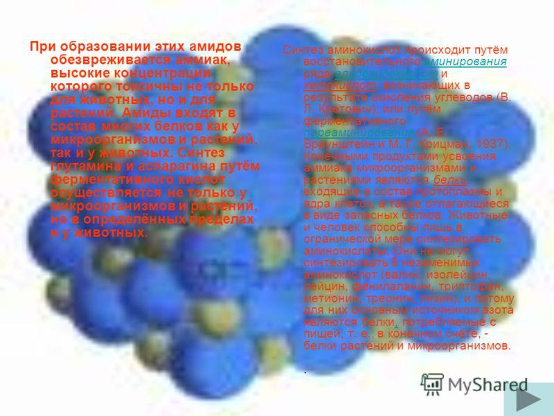 При образовании этих амидов обезвреживается аммиак, высокие концентрации которого токсичны не только для животных, но и для растений. Амиды входят в состав многих белков как у микроорганизмов и растений, так и у животных. Синтез глутамина и аспарагин