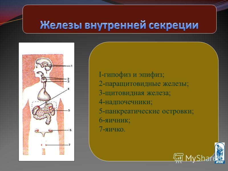 статины и щитовидная железа