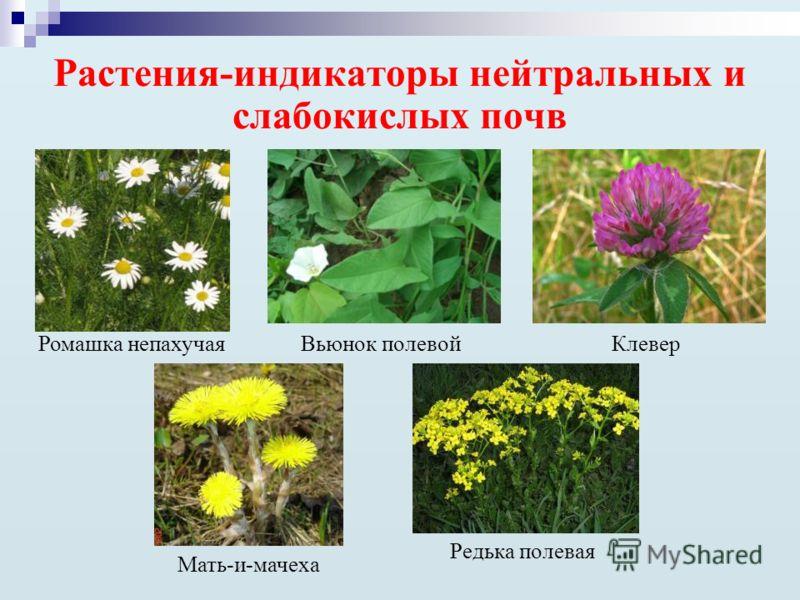 строчки трагично-напевны растения для кислых почв прекрасных новых государственных