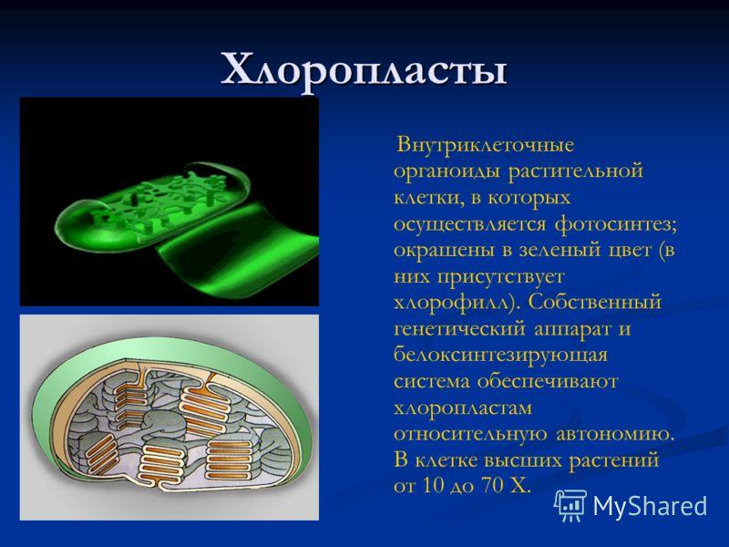 Хлоропласты Внутриклеточные органоиды растительной клетки, в которых осуществляется фотосинтез; окрашены в зеленый цвет (в них присутствует хлорофилл). Собственный генетический аппарат и белоксинтезирующая система обеспечивают хлоропластам относитель