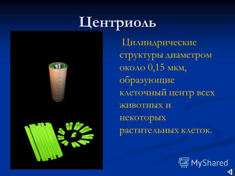Центриоль Цилиндрические структуры диаметром около 0,15 мкм, образующие клеточный центр всех животных и некоторых растительных клеток.