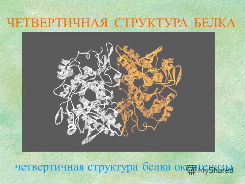 ЧЕТВЕРТИЧНАЯ СТРУКТУРА БЕЛКА четвертичная структура белка оксигеназы