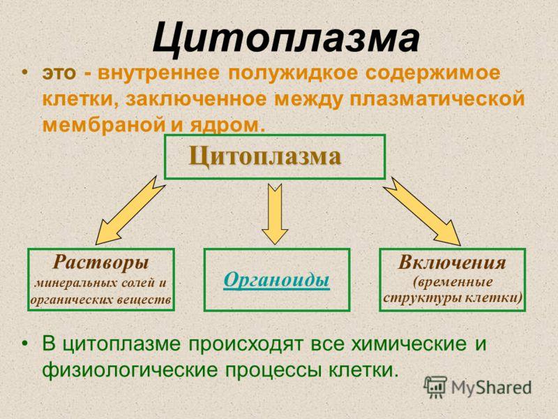 Цитоплазма это - внутреннее полужидкое содержимое клетки, заключенное между плазматической мембраной и ядром. В цитоплазме происходят все химические и физиологические процессы клетки.Цитоплазма Растворы минеральных солей и органических веществ Органо