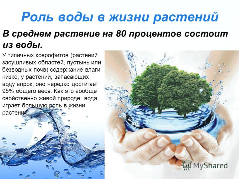 Page 14 Роль воды в жизни растений В среднем растение на 80 процентов состоит из воды. У типичных ксерофитов (растений засушливых областей, пустынь или безводных почв) содержание влаги низко, у растений, запасающих воду впрок, оно нередко достигает 9