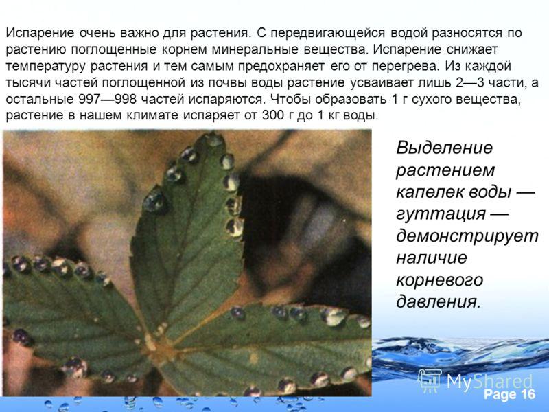 Page 16 Испарение очень важно для растения. С передвигающейся водой разносятся по растению поглощенные корнем минеральные вещества. Испарение снижает температуру растения и тем самым предохраняет его от перегрева. Из каждой тысячи частей поглощенной