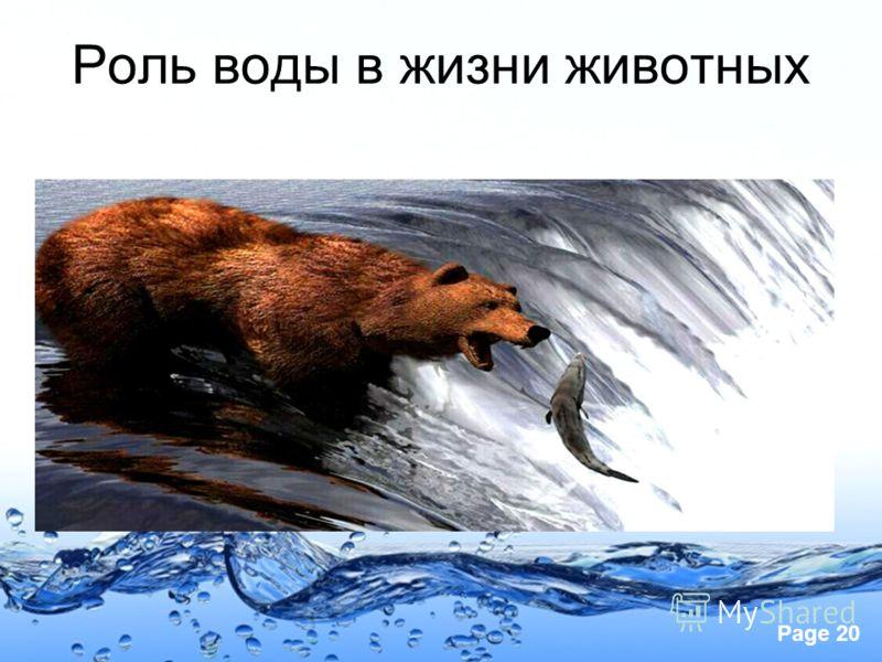 Page 20 Роль воды в жизни животных