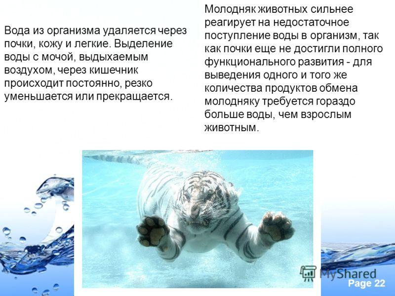 Page 22 Молодняк животных сильнее реагирует на недостаточное поступление воды в организм, так как почки еще не достигли полного функционального развития - для выведения одного и того же количества продуктов обмена молодняку требуется гораздо больше в