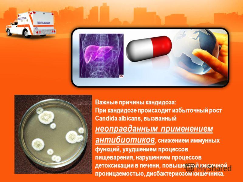Важные причины кандидоза: При кандидозе происходит избыточный рост Candida albicans, вызванный неоправданным применением антибиотиков, снижением иммунных функций, ухудшением процессов пищеварения, нарушением процессов детоксикации в печени, повышенно