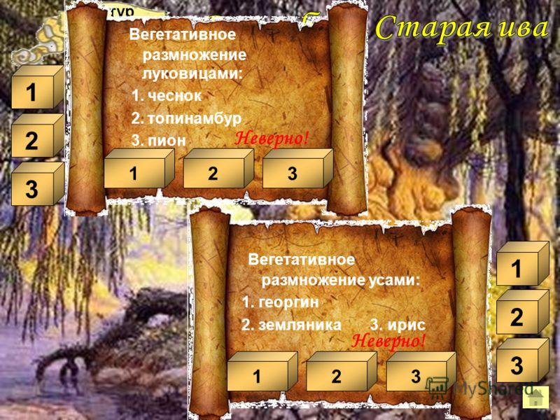 III тур Передвижение органических веществ идет по: 1. сосудам 2. лубу 3. древесине 13 Неверно! 1 2 Слой стебля, в котором накапливаются питательные вещества: 1. луб 2. сердцевина 3. кора 13 Неверно! 1 2 Слой стебля, благодаря которому он растет в тол