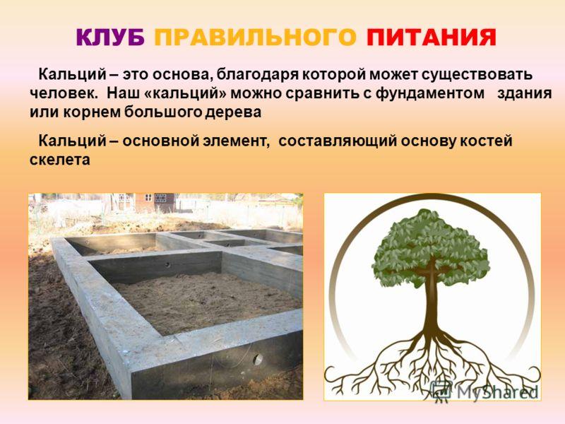 Кальций – это основа, благодаря которой может существовать человек. Наш «кальций» можно сравнить с фундаментом здания или корнем большого дерева Кальций – основной элемент, составляющий основу костей скелета КЛУБ ПРАВИЛЬНОГО ПИТАНИЯ