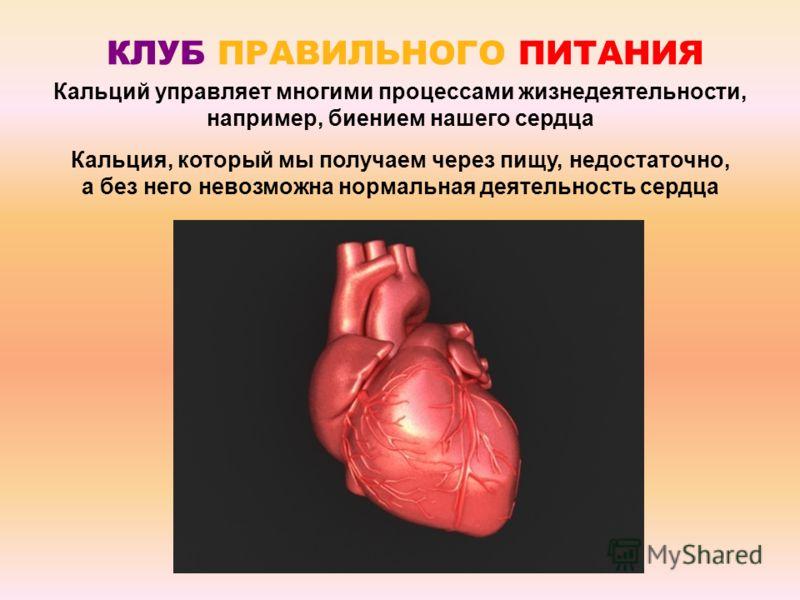 Кальций управляет многими процессами жизнедеятельности, например, биением нашего сердца Кальция, который мы получаем через пищу, недостаточно, а без него невозможна нормальная деятельность сердца КЛУБ ПРАВИЛЬНОГО ПИТАНИЯ