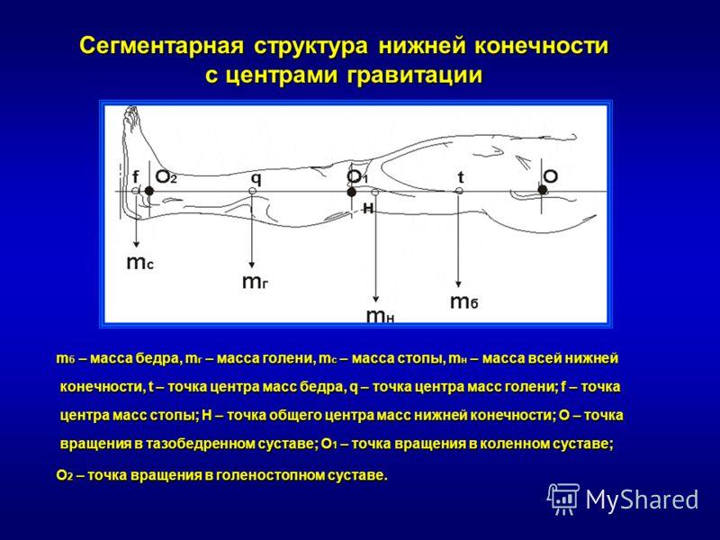 m б – масса бедра, m г – масса голени, m с – масса стопы, m н – масса всей нижней конечности, t – точка центра масс бедра, q – точка центра масс голени; f – точка центра масс стопы; H – точка общего центра масс нижней конечности; О – точка вращения в