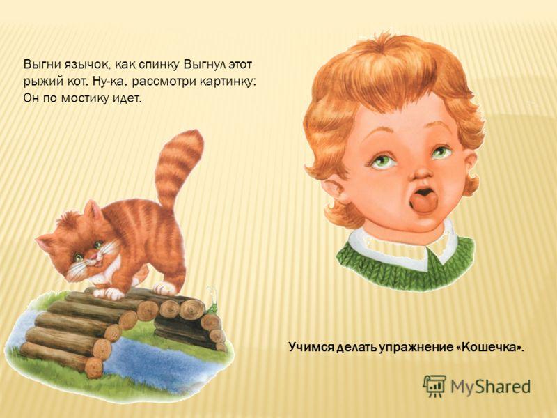 Выгни язычок, как спинку Выгнул этот рыжий кот. Ну-ка, рассмотри картинку: Он по мостику идет. Учимся делать упражнение «Кошечка».