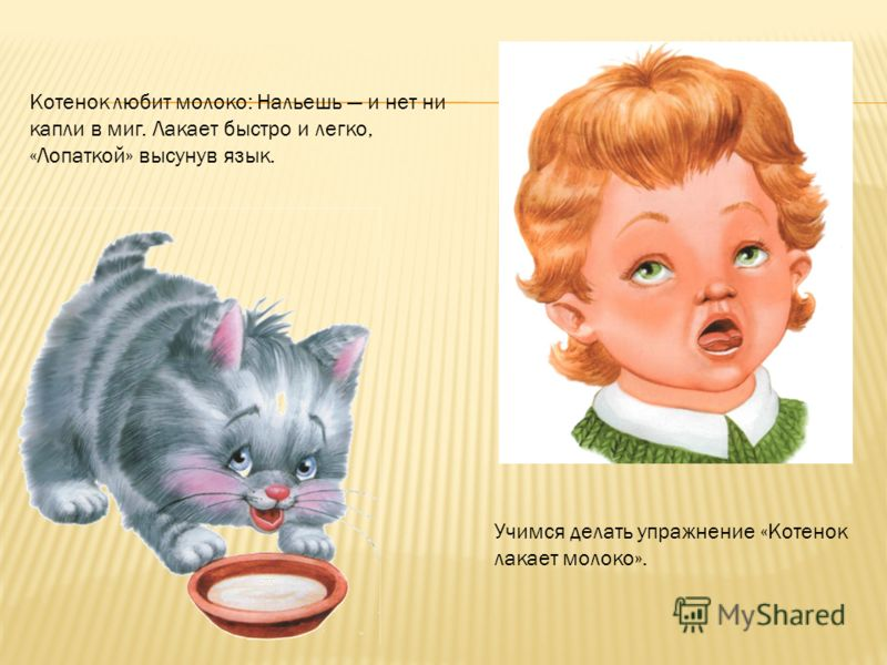 Котенок любит молоко: Нальешь и нет ни капли в миг. Лакает быстро и легко, «Лопаткой» высунув язык. Учимся делать упражнение «Котенок лакает молоко».