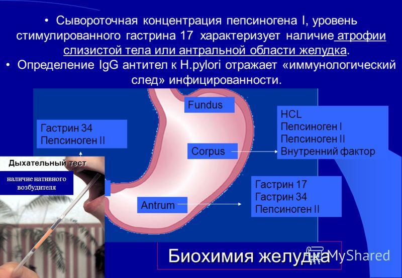 Биохимия желудка Fundus Corpus Antrum Pylorus HCL Пепсиноген I Пепсиноген II Внутренний фактор Гастрин 17 Гастрин 34 Пепсиноген II Гастрин 34 Пепсиноген II Сывороточная концентрация пепсиногена I, уровень стимулированного гастрина 17 характеризует на