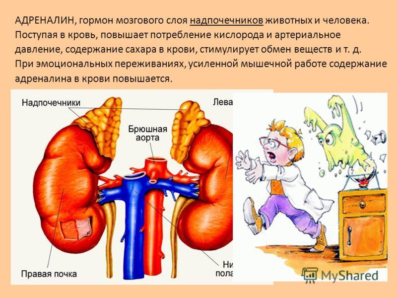 АДРЕНАЛИН, гормон мозгового слоя надпочечников животных и человека. Поступая в кровь, повышает потребление кислорода и артериальное давление, содержание сахара в крови, стимулирует обмен веществ и т. д. При эмоциональных переживаниях, усиленной мышеч