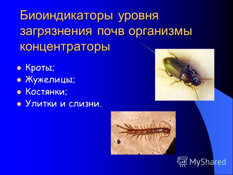 Биоиндикаторы уровня загрязнения почв организмы концентраторы Кроты; Жужелицы; Костянки; Улитки и слизни.