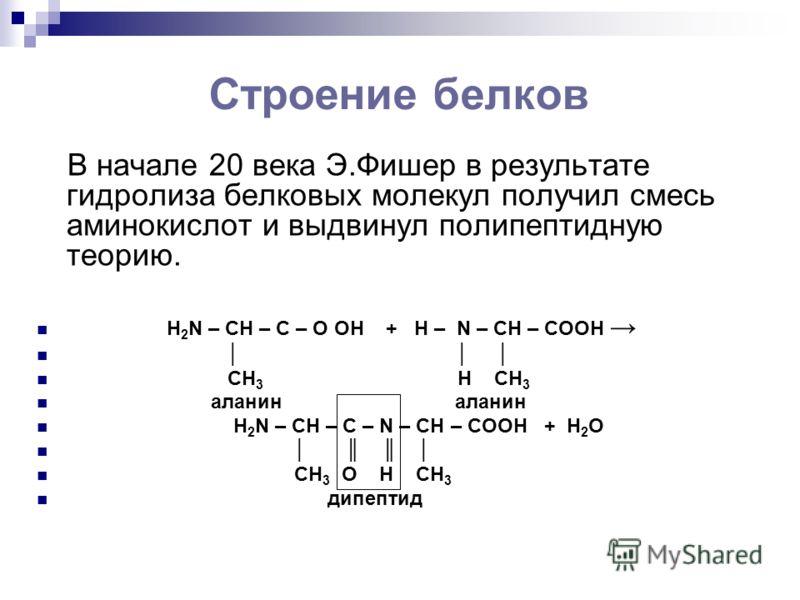 Строение белков В начале 20 века Э.Фишер в результате гидролиза белковых молекул получил смесь аминокислот и выдвинул полипептидную теорию. H 2 N – CH – C – O ОН + Н – N – CH – COOH CH 3 H CH 3 аланин аланин H 2 N – CH – C – N – CH – COOH + Н 2 О CH