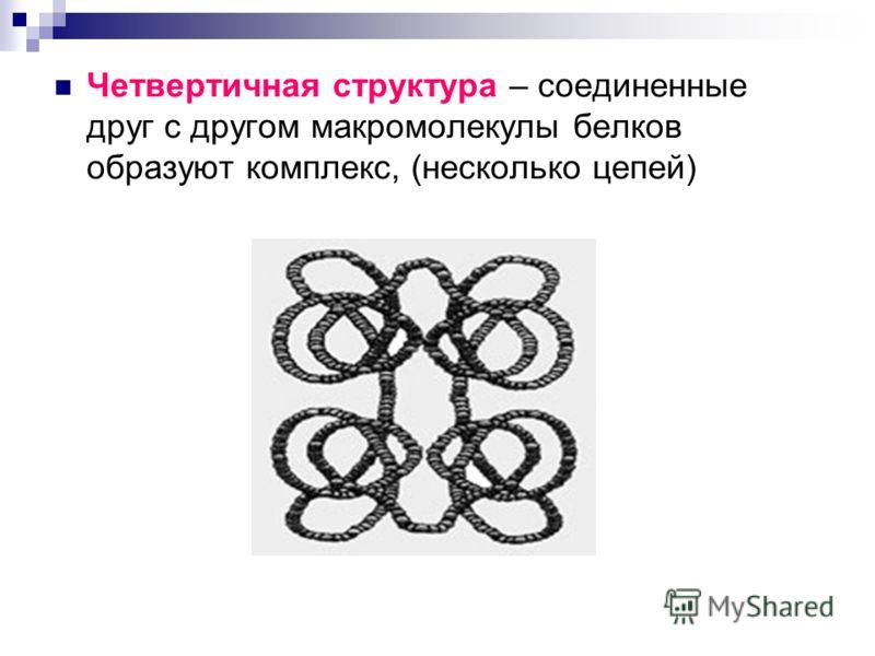 Четвертичная структура – соединенные друг с другом макромолекулы белков образуют комплекс, (несколько цепей)