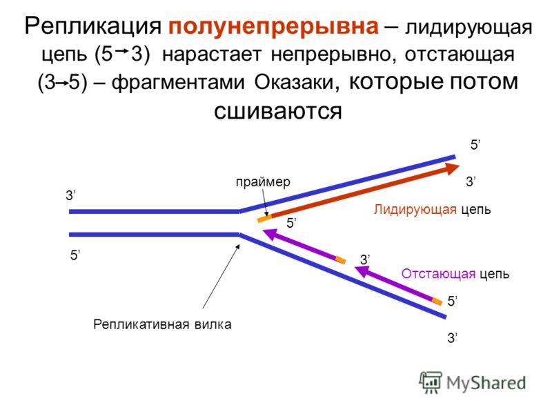Репликация полунепрерывна – лидирующая цепь (5 3) нарастает непрерывно, отстающая (3 5) – фрагментами Оказаки, которые потом сшиваются 3 5 5 3 Репликативная вилка Лидирующая цепь 5 3 5 3 Отстающая цепь праймер
