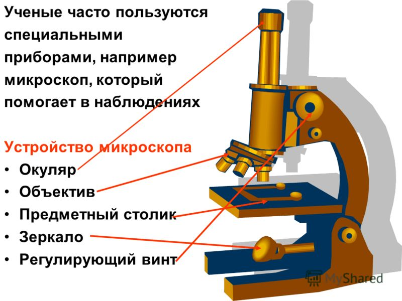 Устройство микроскопа