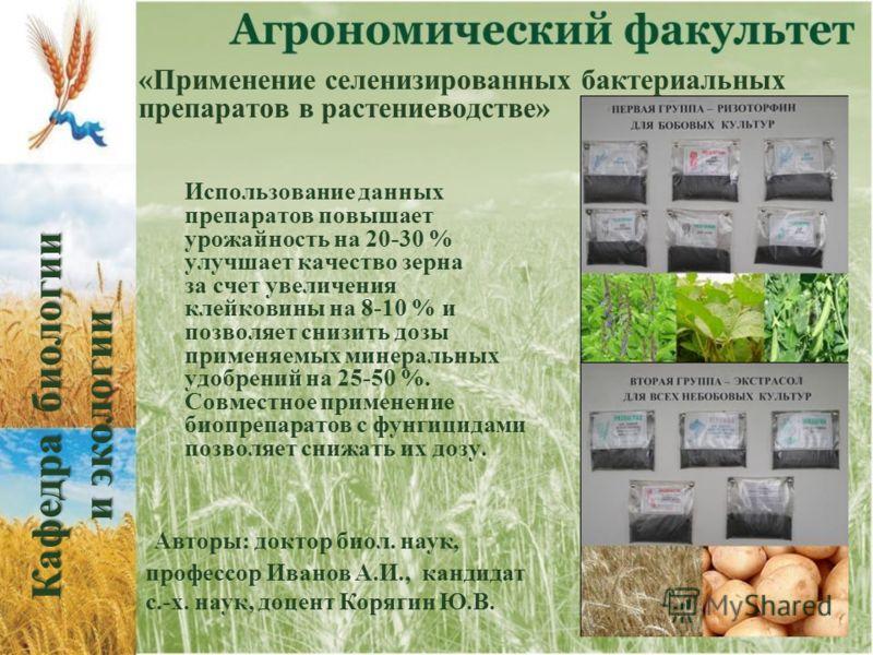 «Применение селенизированных бактериальных препаратов в растениеводстве» Использование данных препаратов повышает урожайность на 20-30 % улучшает качество зерна за счет увеличения клейковины на 8-10 % и позволяет снизить дозы применяемых минеральных