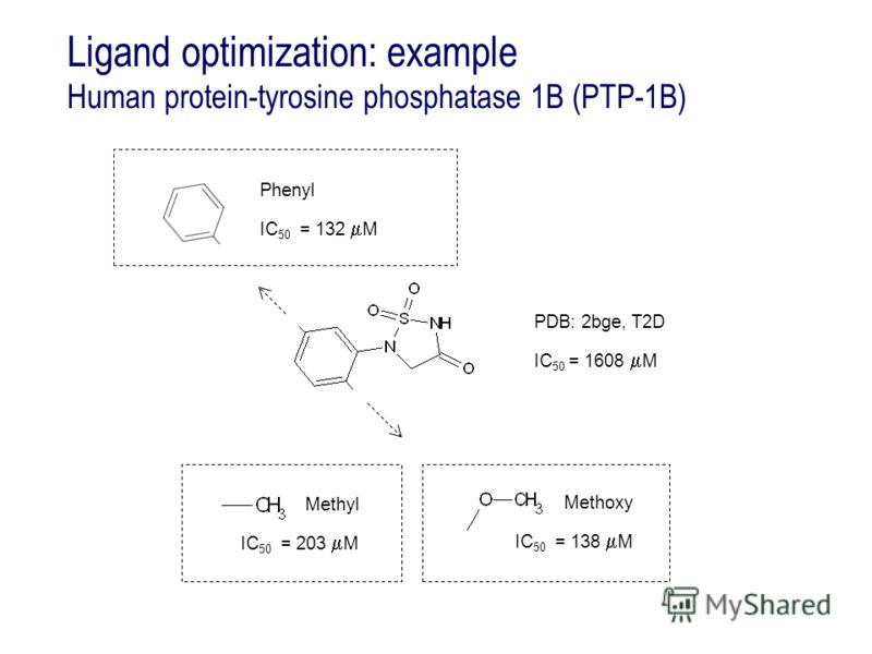 Ligand optimization: example Human protein-tyrosine phosphatase 1B (PTP-1B) Methoxy IC 50 = 138 M PDB: 2bge, T2D IC 50 = 1608 M Phenyl IC 50 = 132 M Methyl IC 50 = 203 M
