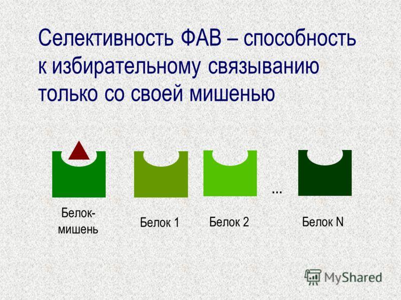 Селективность ФАВ – способность к избирательному связыванию только со своей мишенью Белок- мишень Белок 1 Белок 2 Белок N …