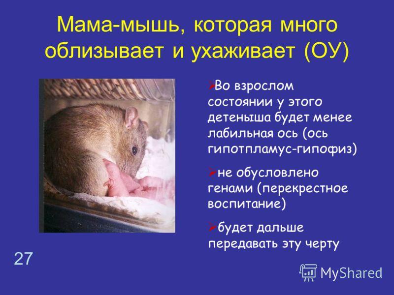 Мама-мышь, которая много облизывает и ухаживает (ОУ) Во взрослом состоянии у этого детеныша будет менее лабильная ось (ось гипотпламус-гипофиз) не обусловлено генами (перекрестное воспитание) будет дальше передавать эту черту 27