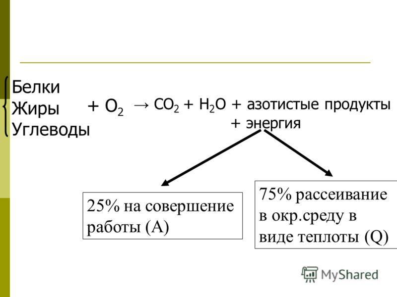 СО 2 + Н 2 О + азотистые продукты + энергия Белки Жиры Углеводы + О 2 25% на совершение работы (А) 75% рассеивание в окр.среду в виде теплоты (Q)