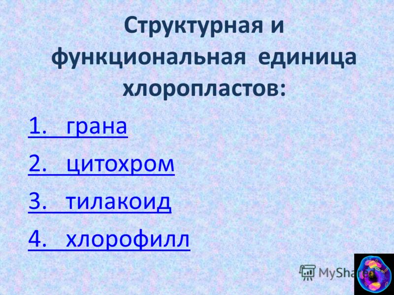 Структурная и функциональная единица хлоропластов: 1. грана 2. цитохром 3. тилакоид 4. хлорофилл