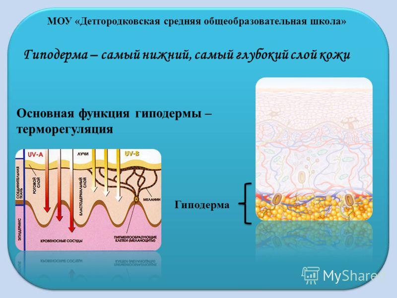 МОУ «Детгородковская средняя общеобразовательная школа» Гиподерма – самый нижний, самый глубокий слой кожи Гиподерма Основная функция гиподермы – терморегуляция