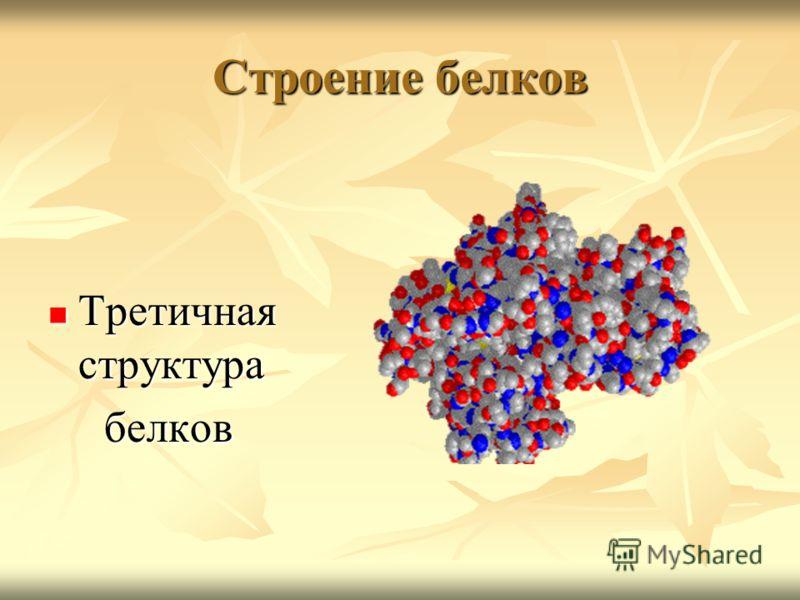 Строение белков Третичная структура Третичная структура белков белков