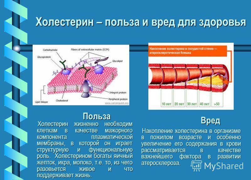 Вред Накопление холестерина в организме в пожилом возрасте и особенно увеличение его содержания в крови рассматривается в качестве важнейшего фактора в развитии атеросклероза. Вред Накопление холестерина в организме в пожилом возрасте и особенно увел