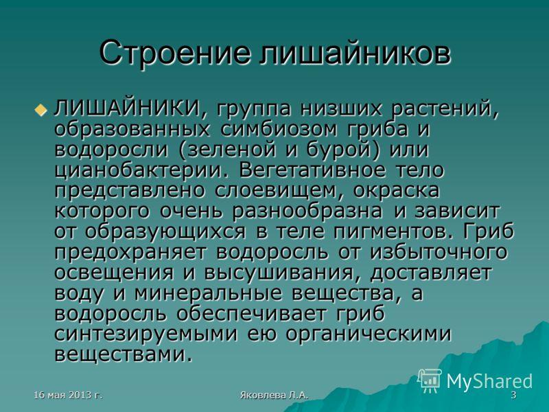 16 мая 2013 г.16 мая 2013 г.16 мая 2013 г.16 мая 2013 г. Яковлева Л.А. 3 Строение лишайников ЛИШАЙНИКИ, группа низших растений, образованных симбиозом гриба и водоросли (зеленой и бурой) или цианобактерии. Вегетативное тело представлено слоевищем, ок