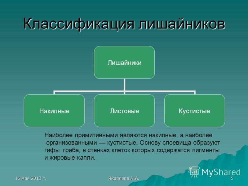 16 мая 2013 г.16 мая 2013 г.16 мая 2013 г.16 мая 2013 г. Яковлева Л.А. 5 Классификация лишайников Лишайники НакипныеЛистовыеКустистые Наиболее примитивными являются накипные, а наиболее организованными кустистые. Основу слоевища образуют гифы гриба,