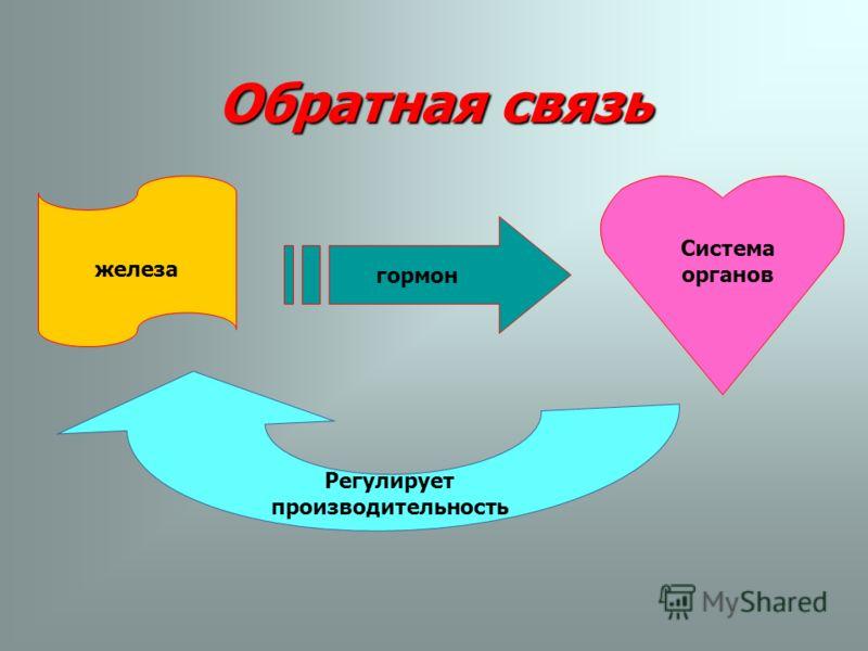 Обратная связь Система органов гормон железа Регулирует производительность