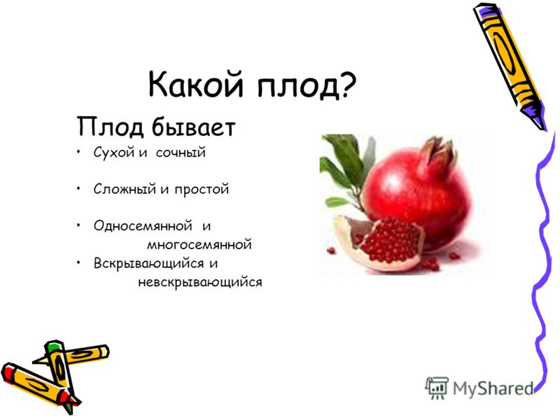 Какой плод? Плод бывает Сухой и сочный Сложный и простой Односемянной и многосемянной Вскрывающийся и невскрывающийся