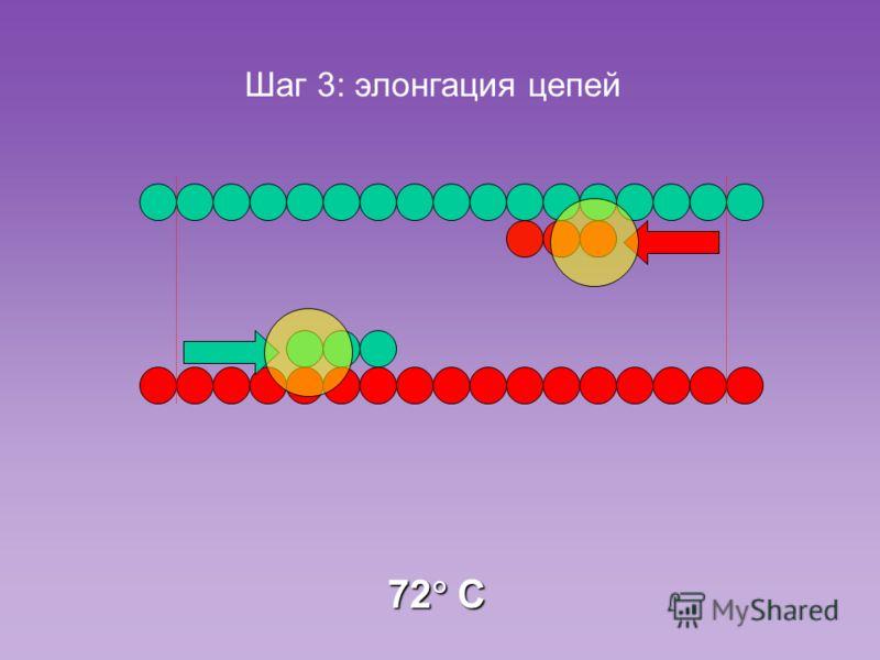 Шаг 3: элонгация цепей