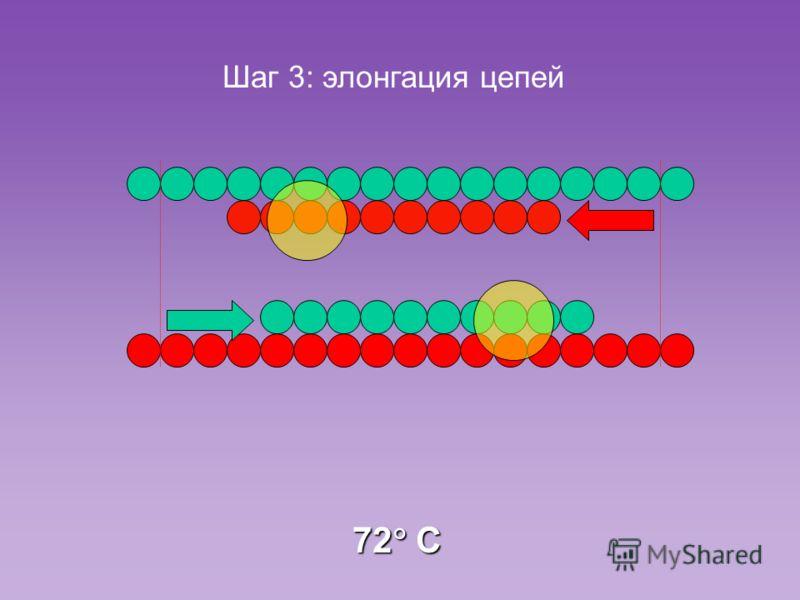 72 C Шаг 3: элонгация цепей