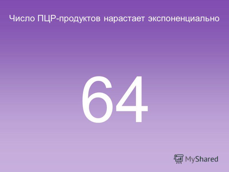 Число ПЦР-продуктов нарастает экспоненциально 32