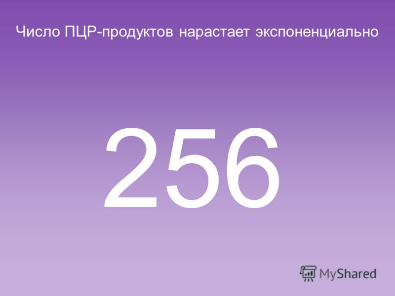 Число ПЦР-продуктов нарастает экспоненциально 128