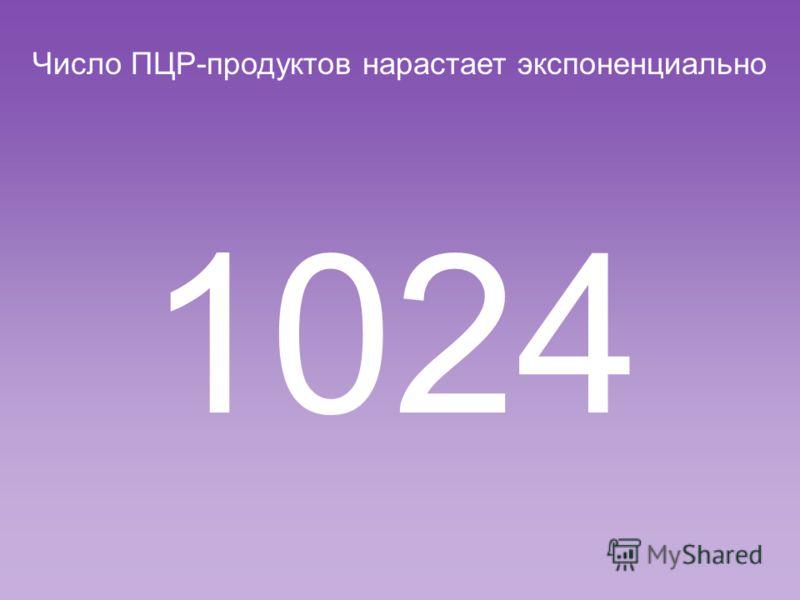Число ПЦР-продуктов нарастает экспоненциально 512