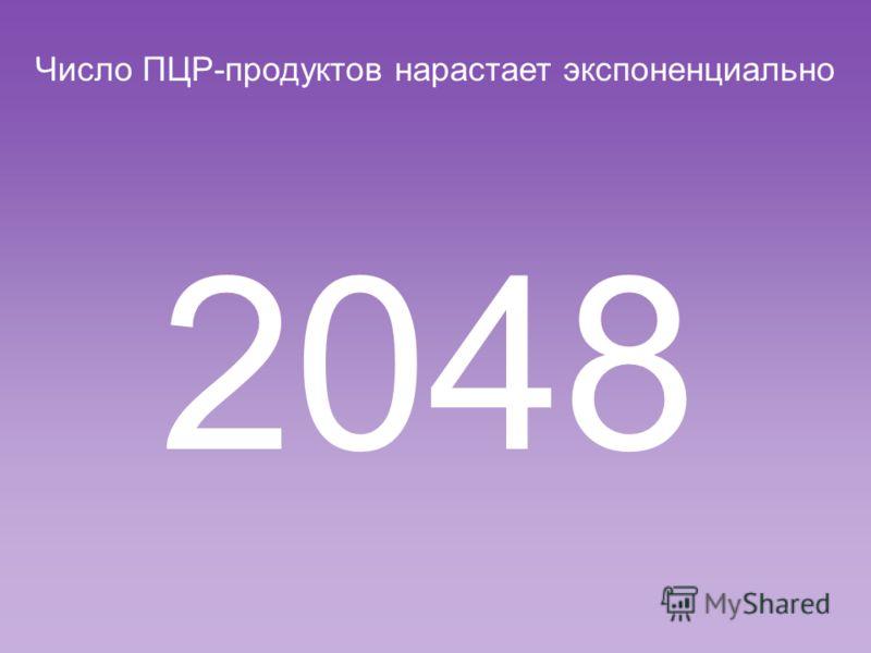 Число ПЦР-продуктов нарастает экспоненциально 1024