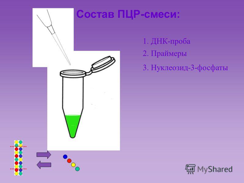 Состав ПЦР-смеси: 1. ДНК-проба 2. Праймеры